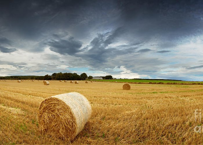 Storm Greeting Card featuring the photograph Straw Bales Pano by Jane Rix