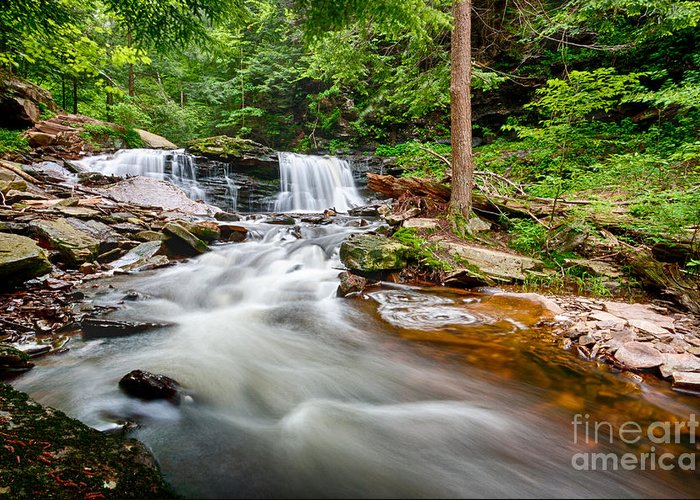 Water Greeting Card featuring the photograph Stream At Ricketts Glen by Eric Gaston