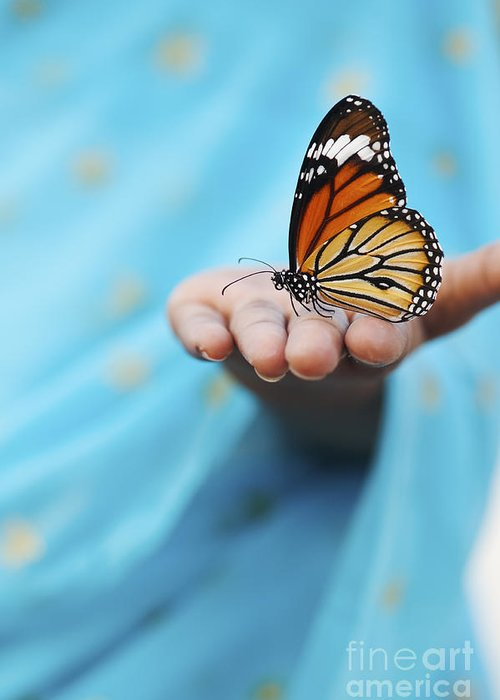 Indian Girl Greeting Card featuring the photograph Striped Tiger Butterfly by Tim Gainey