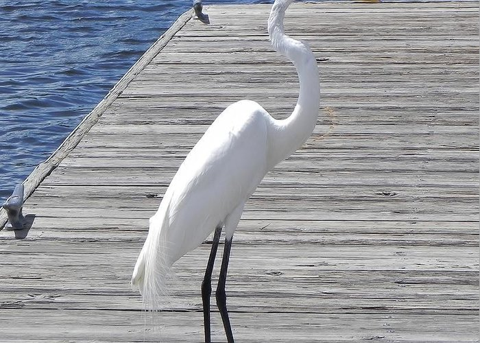Egret Greeting Card featuring the photograph Strolling On The Dock by Cynthia N Couch