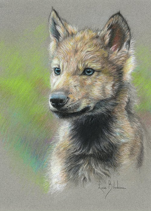 Wolves Drawings Greeting Cards