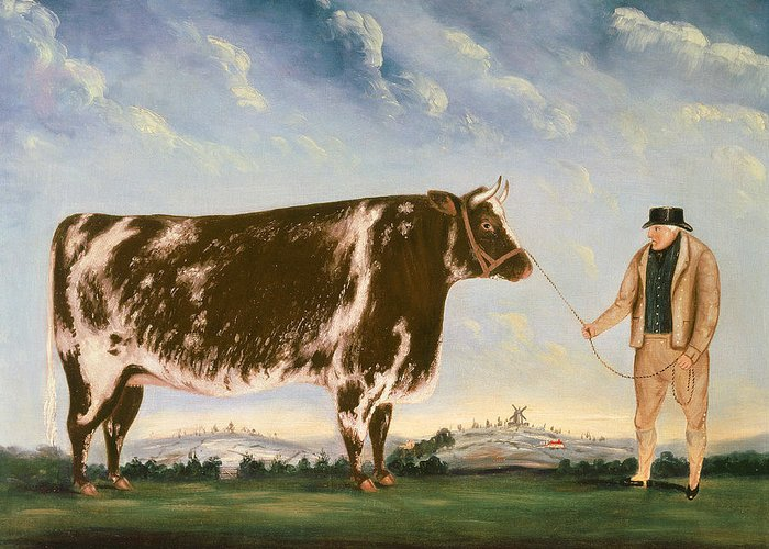 Cow Greeting Card featuring the painting Study Of A Shorthorn by William Joseph Shayer