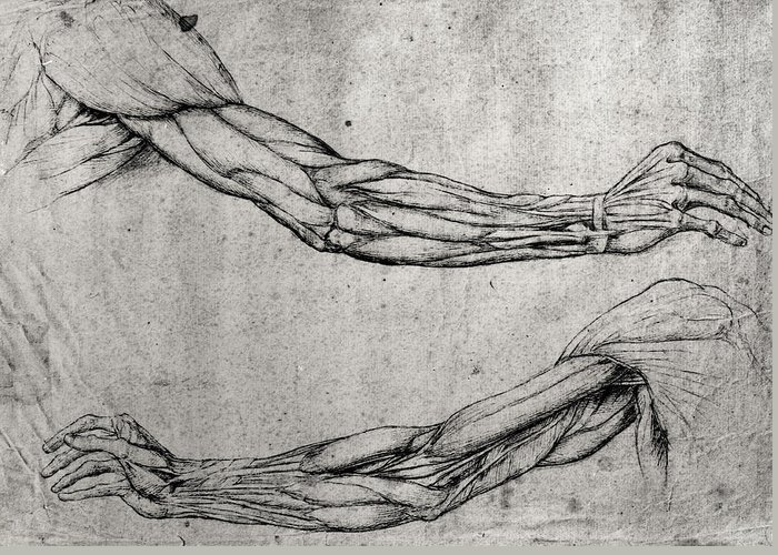 Da Greeting Card featuring the drawing Study Of Arms by Leonardo Da Vinci