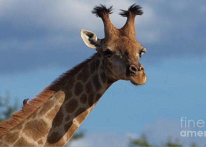 Giraffe Greeting Card featuring the photograph Stylish Giraffe by Mareko Marciniak