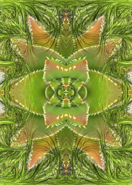 Green Greeting Card featuring the photograph Succulent by Candee Lucas