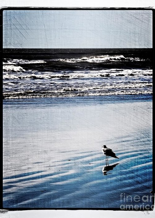 Ocean Greeting Card featuring the photograph Summer Beach by Perry Webster