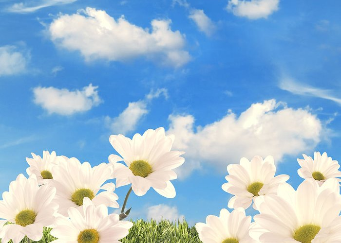 Daisy Greeting Card featuring the photograph Summer Daisies by Amanda Elwell