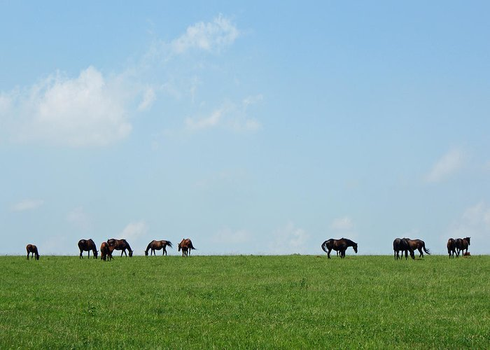 Thoroughbreds Greeting Card featuring the photograph Summer Grazing by Roger Potts