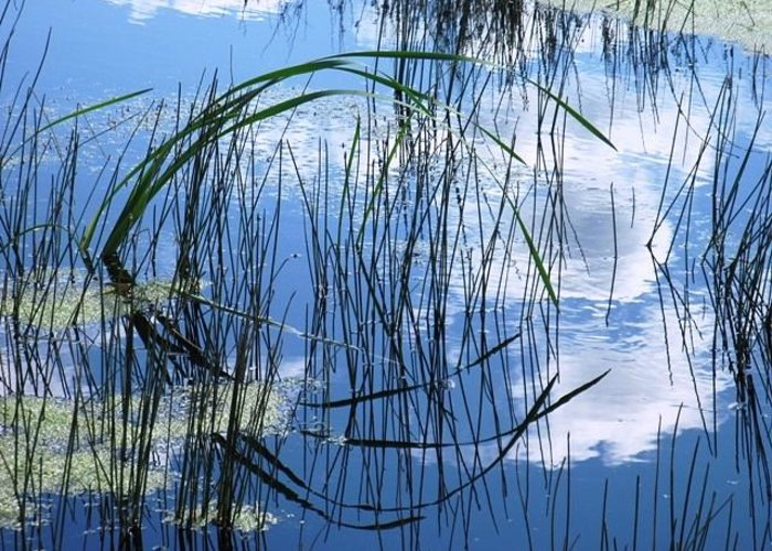 Pond Greeting Card featuring the photograph Summer Reflection by Susan Copley