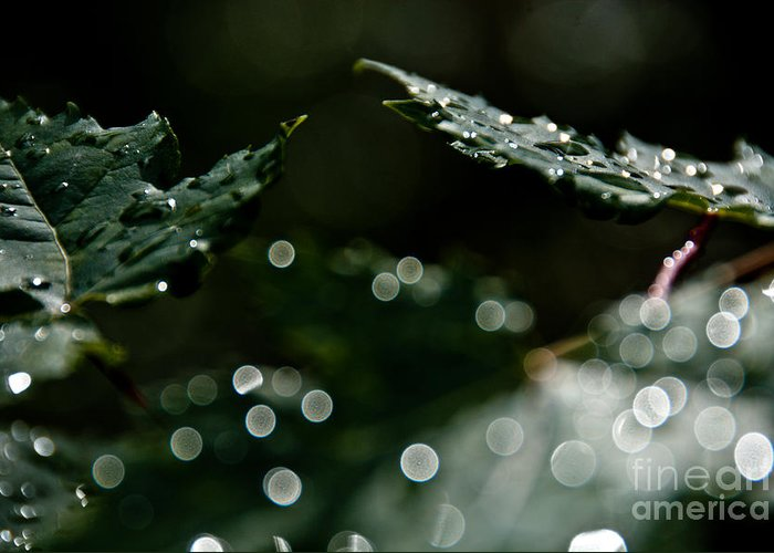 Leaves Greeting Card featuring the photograph Sun After The Rain by Cheryl Baxter