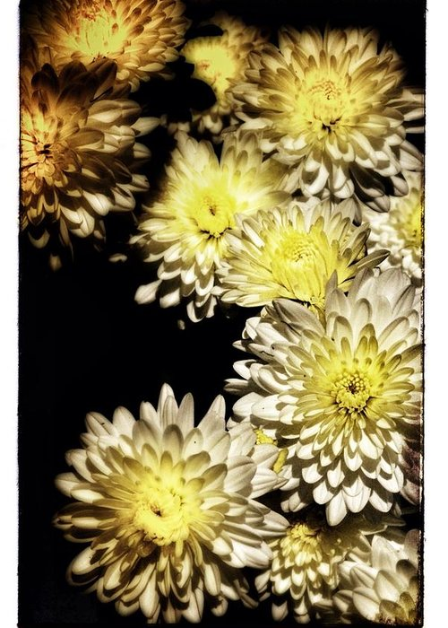 White Flowers Greeting Card featuring the photograph Sunburst by Timothy Mahoney