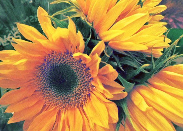 Sunflowers Greeting Card featuring the photograph Sunflower A by Pepsi Freund