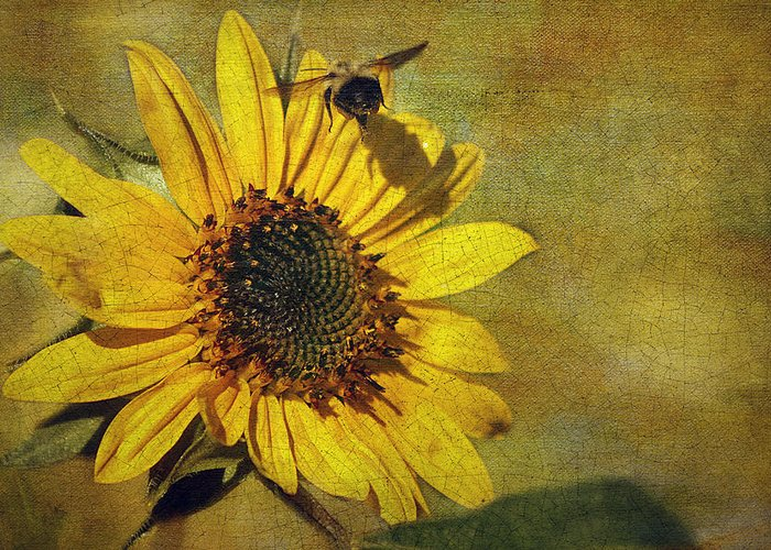 Cindi Ressler Greeting Card featuring the photograph Sunflower And Bumble Bee by Cindi Ressler