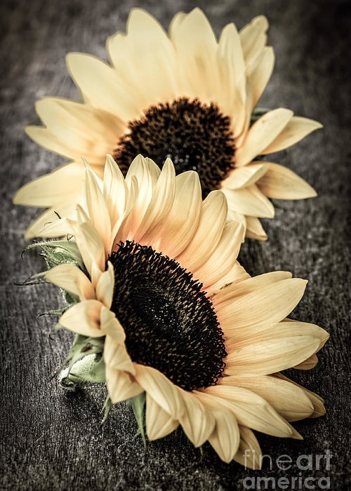 Sunflowers Greeting Card featuring the photograph Sunflower Blossoms by Elena Elisseeva