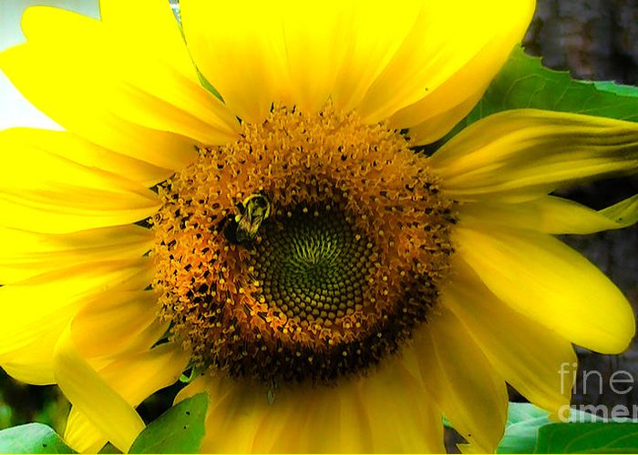 Sunflower Greeting Card featuring the photograph Sunflower by Brittany Perez