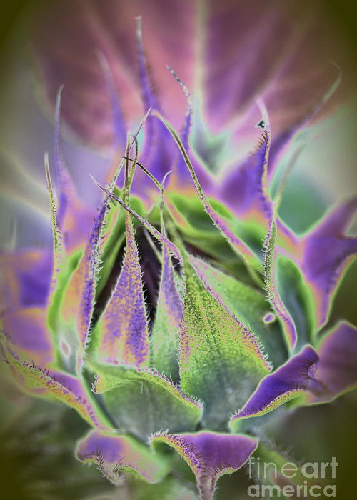 Sunflower Greeting Card featuring the photograph Sunflower Bud Abstract by Christiane Schulze Art And Photography