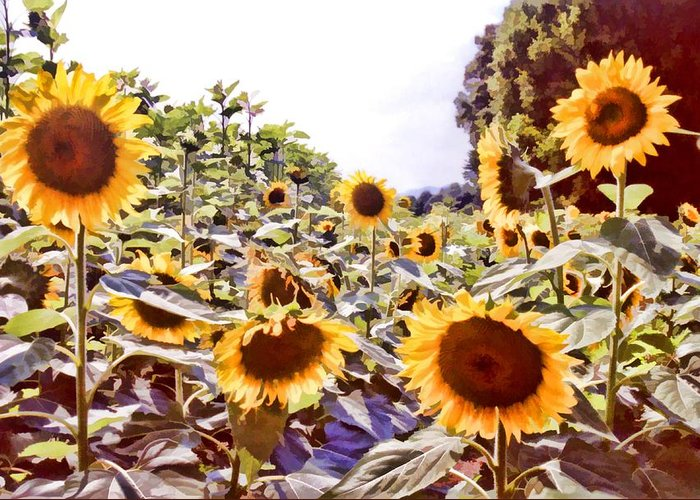Floral Greeting Card featuring the photograph Sunflower Field by Jan Amiss Photography