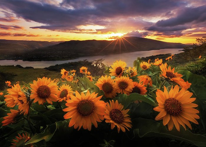 Outdoors Greeting Card featuring the photograph Sunflower Field by Jeremy Cram Photography