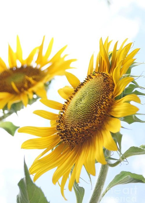 Agriculture Greeting Card featuring the photograph Sunflower Perspective by Kerri Mortenson