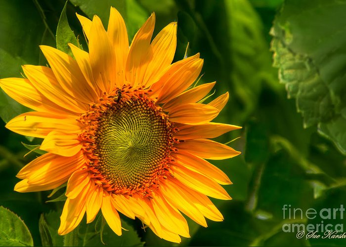Foliage Greeting Card featuring the photograph Sunflower Single by Sue Karski