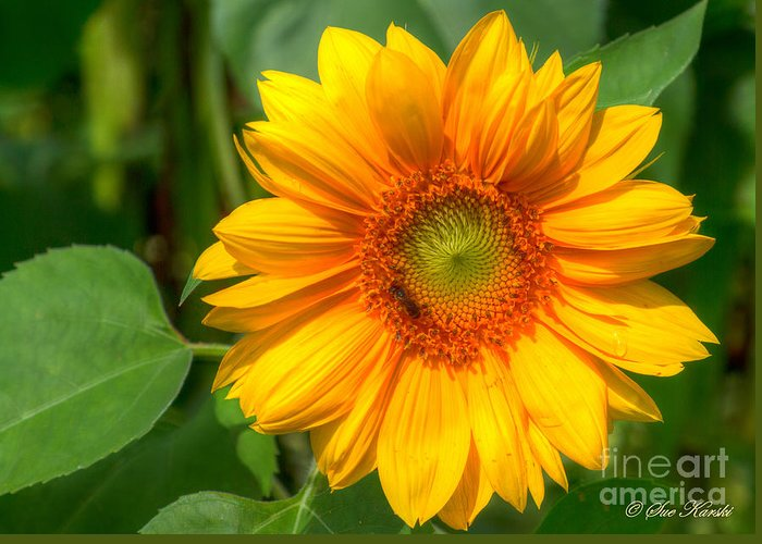 Foliage Greeting Card featuring the photograph Sunflower Smile by Sue Karski