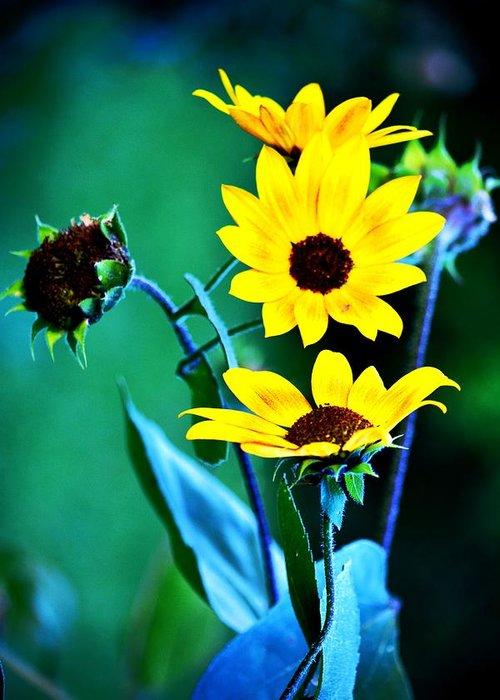 Small Sunflowers Greeting Card featuring the photograph Sunflowers Portrait by Karen Majkrzak