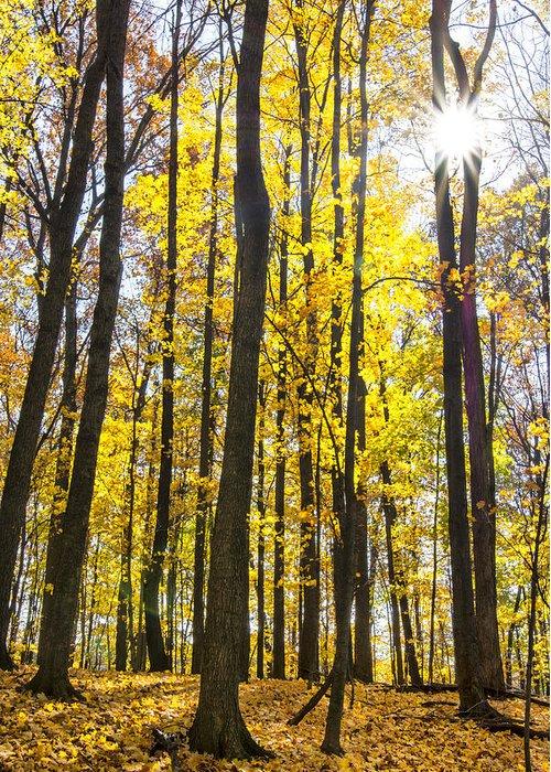 Autumn Greeting Card featuring the photograph Sunburst Through Trees by Gej Jones