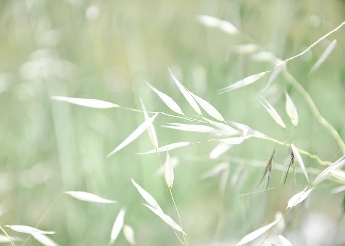 Glow Greeting Card featuring the photograph Sunlit Grass by Margaret Pitcher