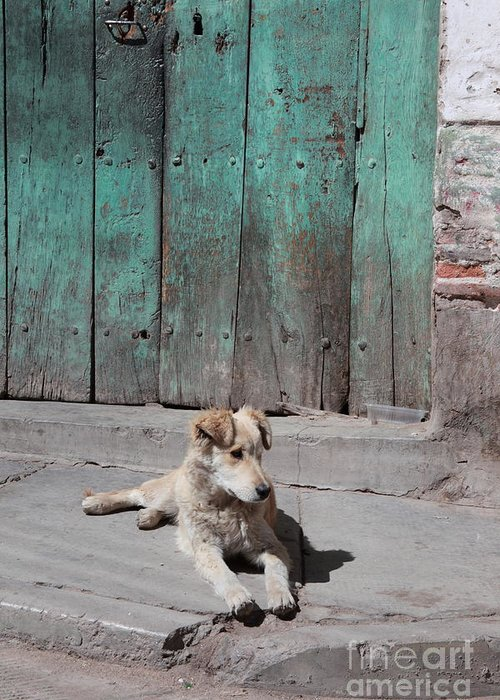Dog Greeting Card featuring the photograph Dog Enjoying A Sunny Doorstep by James Brunker