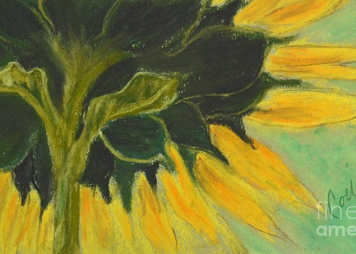 Sunflower Greeting Card featuring the drawing Sunny Side Up by Cori Solomon