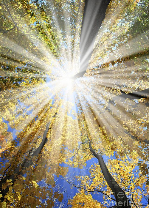 Autumn Greeting Card featuring the photograph Sunrays In The Forest by Elena Elisseeva