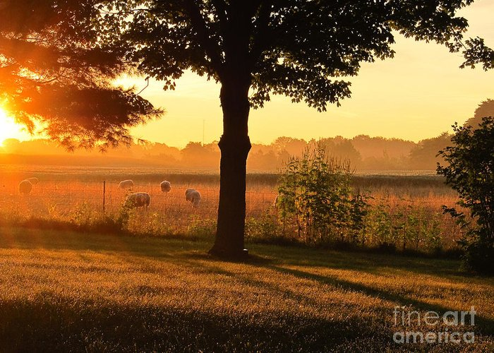 Sunrise Greeting Card featuring the photograph Sunrise 365 13 by Tina M Wenger