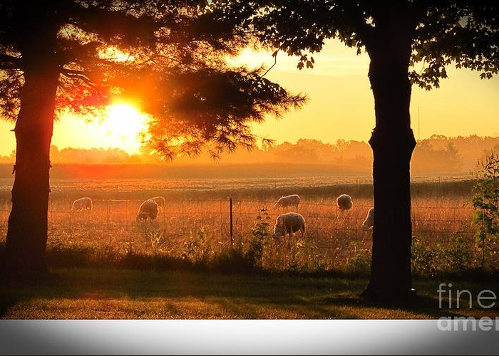 Sunrise Greeting Card featuring the photograph Sunrise 365 15 by Tina M Wenger