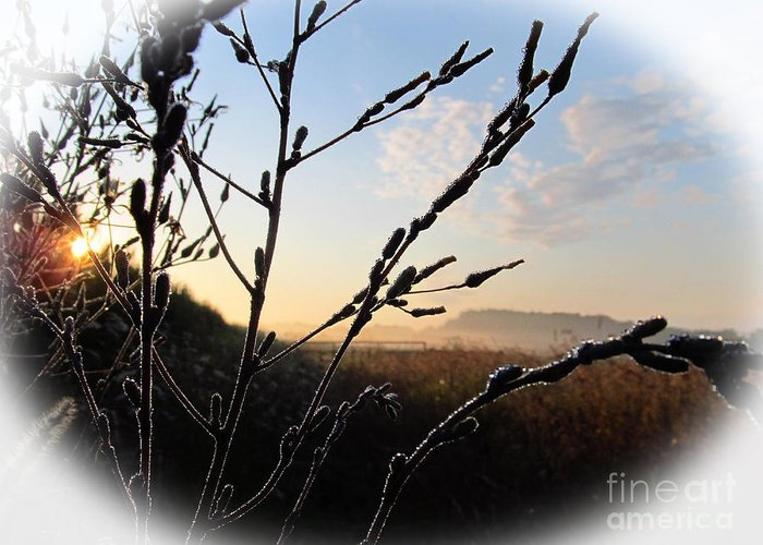 Sunrise Greeting Card featuring the photograph Sunrise 365 2 by Tina M Wenger