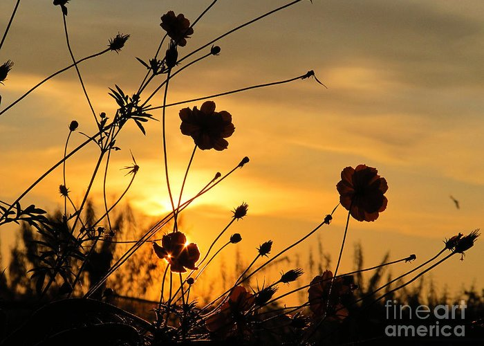 Sun Greeting Card featuring the photograph Sunrise 365 28 by Tina M Wenger