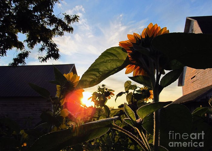 Sun Greeting Card featuring the photograph Sunrise 365 29 by Tina M Wenger