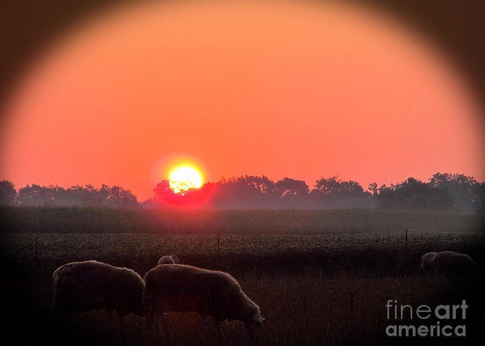 Sunrise Greeting Card featuring the photograph Sunrise 365 9 by Tina M Wenger