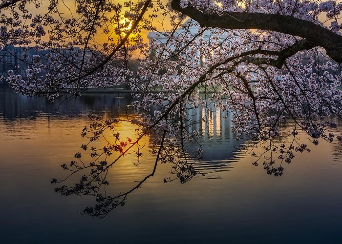 Thomas Jefferson Memorial Greeting Card featuring the photograph Sunrise At The Thomas Jefferson Memorial by Susan Candelario