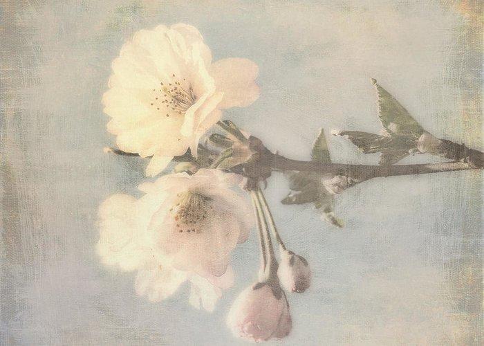 Pink Blossoms Digital Art Greeting Cards