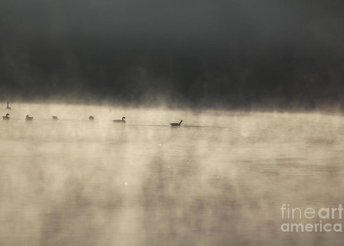Lake Photographs Greeting Card featuring the photograph Sunrise Geese by Melissa Petrey