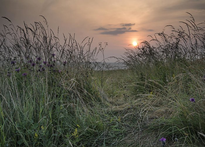 Landscape Greeting Card featuring the photograph Sunrise Landscape In Summer Looking Through Wild Thistles And Gr by Matthew Gibson