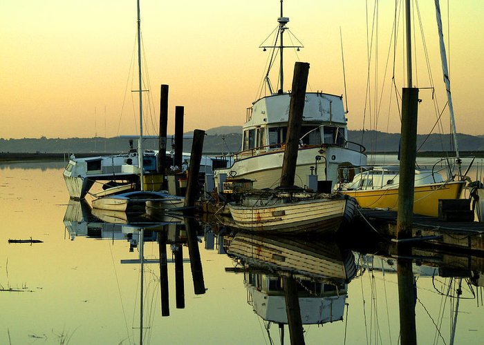 Petaluma River Greeting Card featuring the photograph Sunrise On The Petaluma River by Bill Gallagher