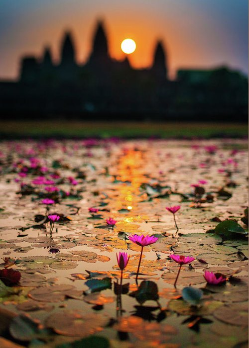 Tranquility Greeting Card featuring the photograph Sunrise Over The Lotus Flowers Of by © Francois Marclay