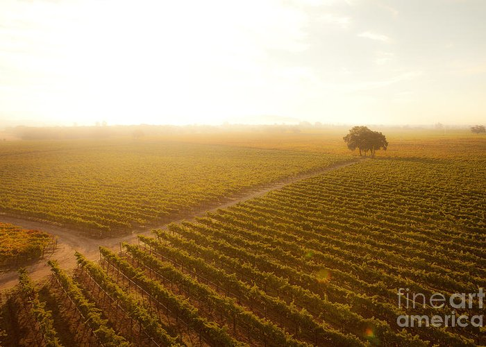 Vineyard Greeting Card featuring the photograph Sunrise Over The Vineyard by Diane Diederich