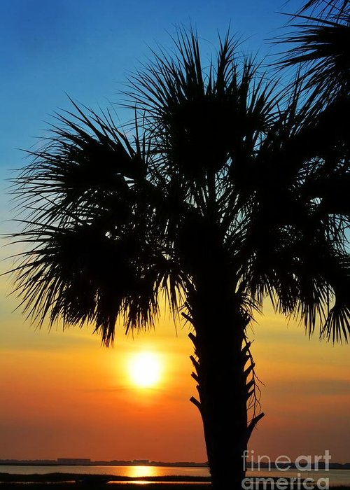 Sunrise Greeting Card featuring the photograph Sunrise Palm Tree by Kathy Baccari