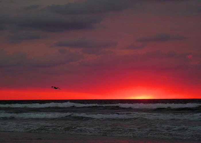 Sunrise Greeting Card featuring the photograph Sunrise Pink by JC Findley