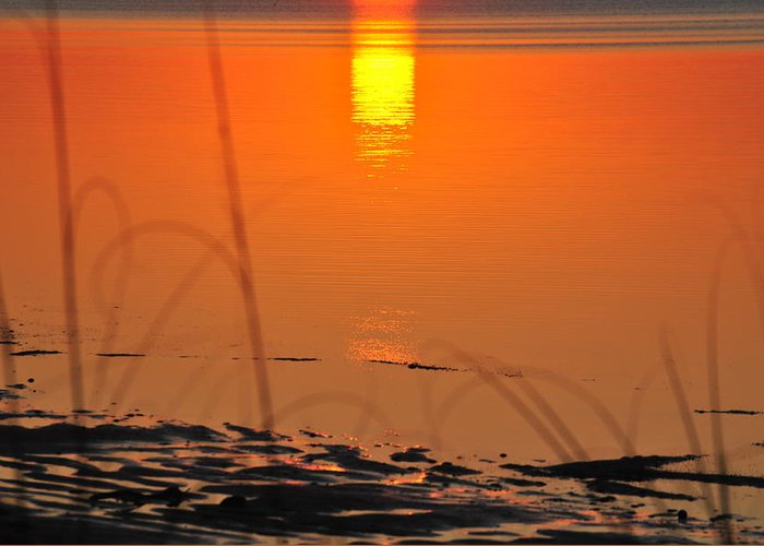 Sunrise Greeting Card featuring the photograph Sunrise Reflection by Michele Kaiser