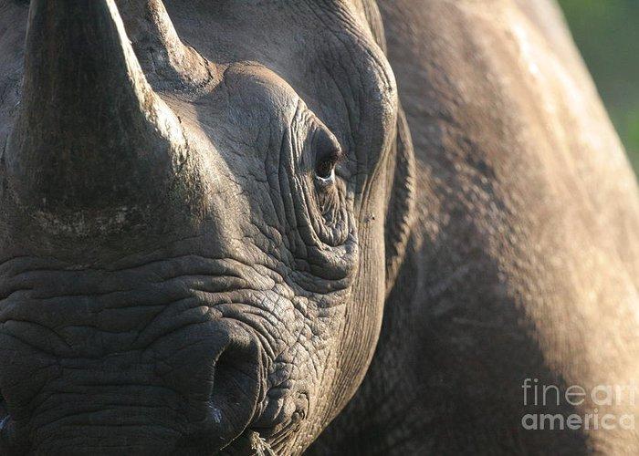 Black Rhino Greeting Card featuring the photograph Sunrise Rhino by Alison Kennedy-Benson