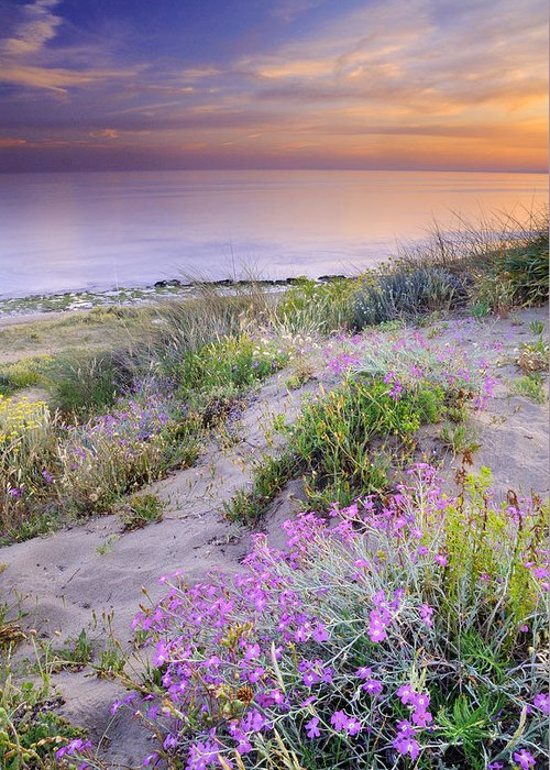 Seascape Greeting Card featuring the photograph Sunset At The Beach Flowers On The Sand by Guido Montanes Castillo