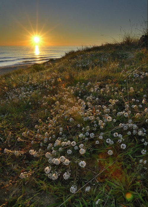 Seascape Greeting Card featuring the photograph Sunset At The Beach White Flowers On The Sand by Guido Montanes Castillo